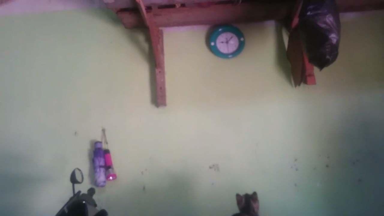 Kucing lucu usil suka jam dinding