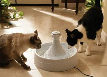 cat water fountain,best cat water fountains